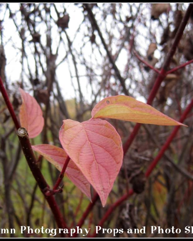 fall-autumn-photography-props-photo-shoot-ideas