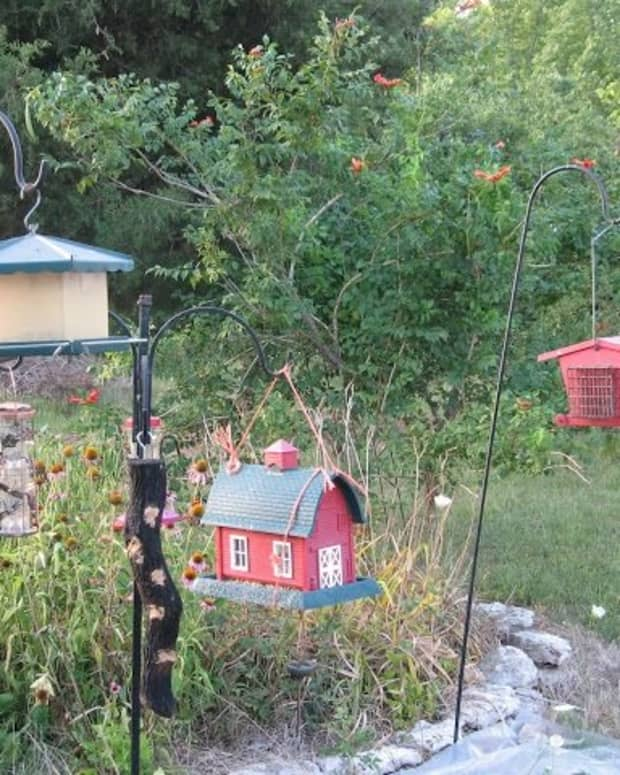 8-easy-ways-to-landscape-under-bird-feeders