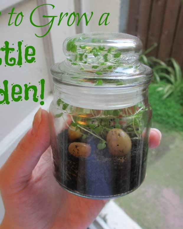how-to-grow-a-bottle-garden