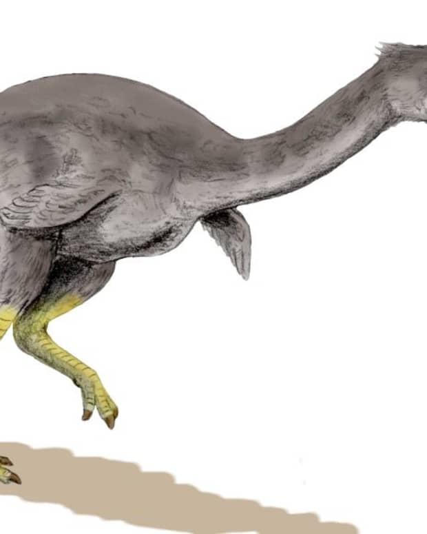 bullockornis-planei-the-demon-duck-of-doom