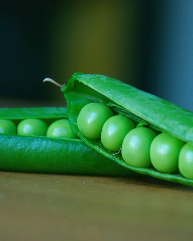 how-to-grow-organic-garden-peas