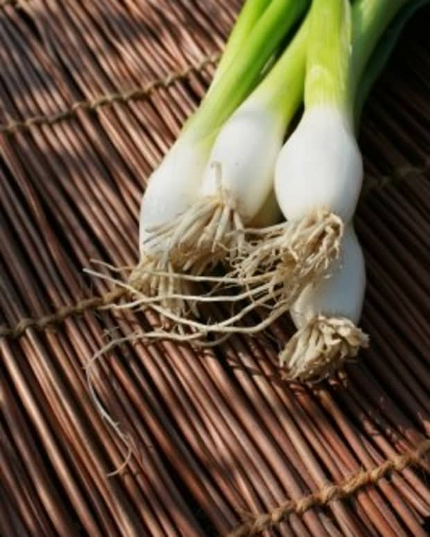 how-to-grow-onions-the-comprehensive-guide