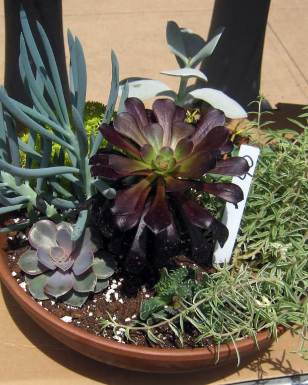 houseplants-a-gallery-of-succulents-and-how-to-grow-them