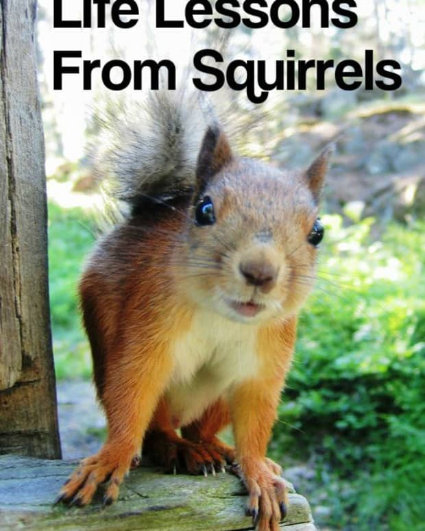 how-to-live-your-best-life-lessons-learned-from-squirrels