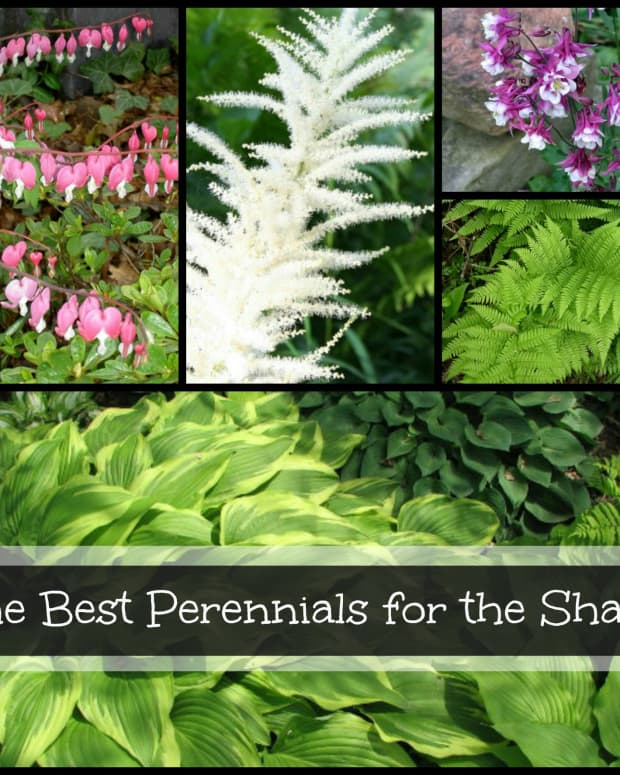 gardening-in-the-shade-perennials-for-shady-locations