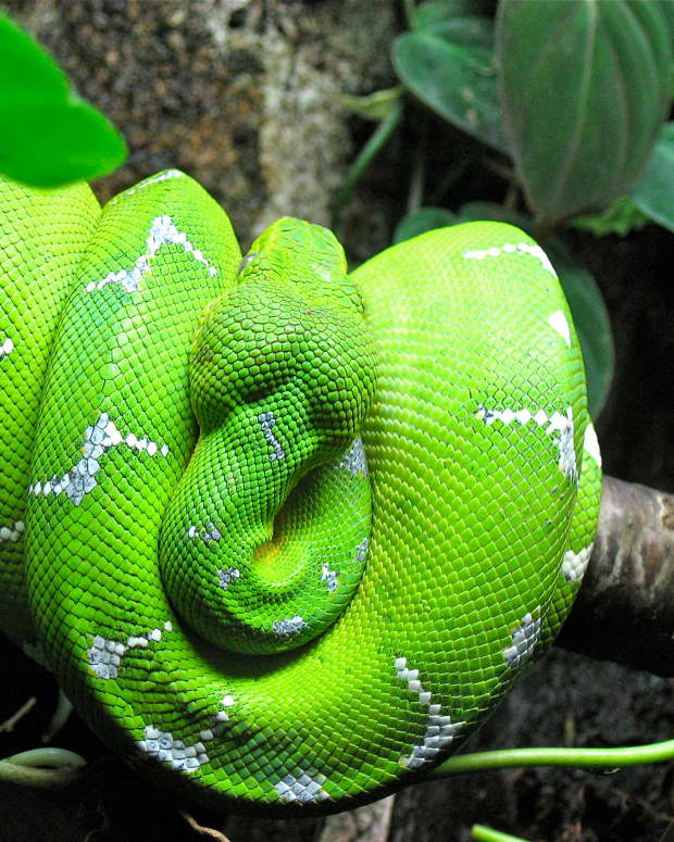snakes-strange-facts-about-fascinating-reptiles