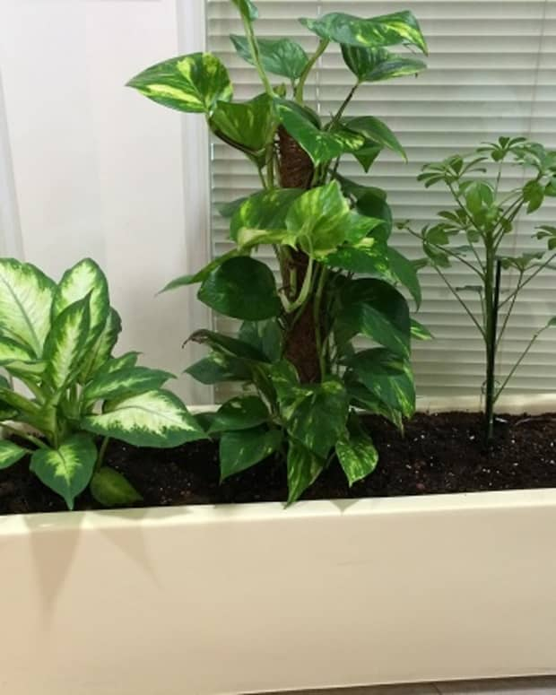 indoor-plants-that-help-to-purify-air-in-your-home-naturally