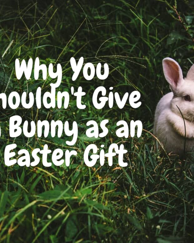 best-reasons-to-not-give-a-live-bunny-for-easter