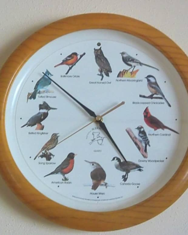 how-can-i-get-my-birds-back-in-sync-with-my-singing-bird-clock