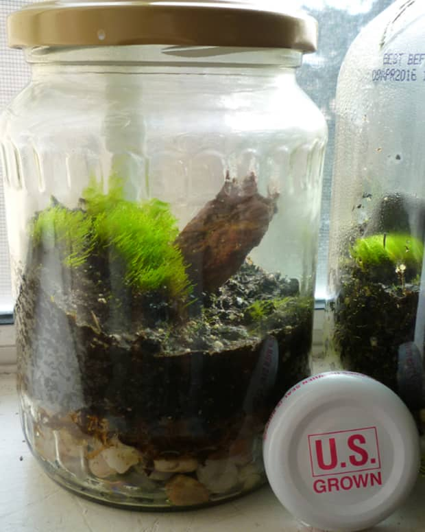 how-to-make-a-terrarium-in-a-jar