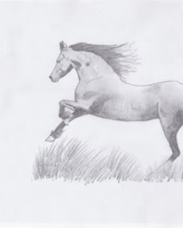 the-stallion-a-poem