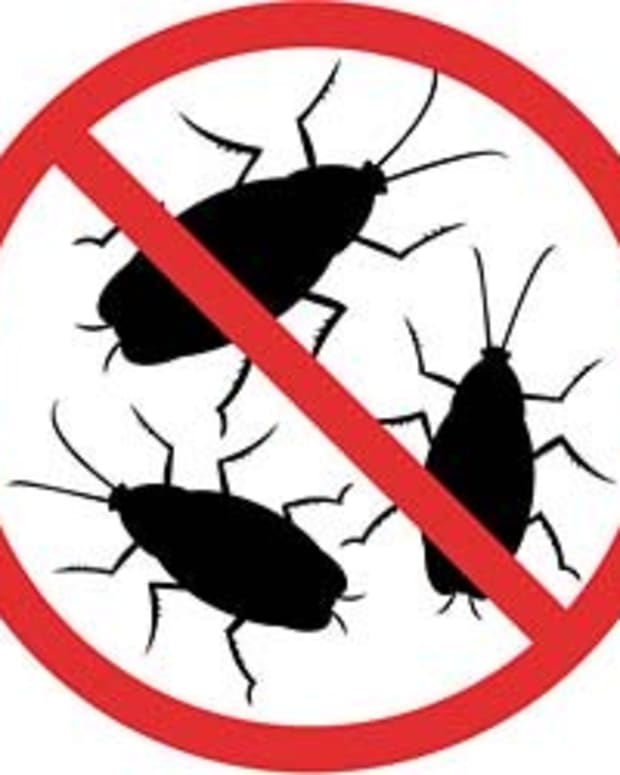 how-to-get-rid-of-cockroaches-at-home