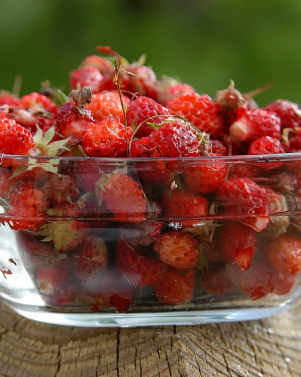 wild-strawberries-versus-mock-strawberries