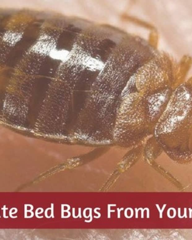 bed-bug-guide-how-to-find-them-how-to-kill-them-how-to-prevent-them-easy-diy-tips-and-tricks