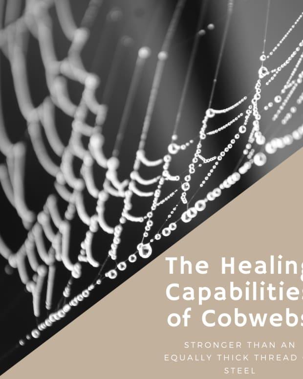 organic-healing-treating-bleeding-wounds-with-cobwebs