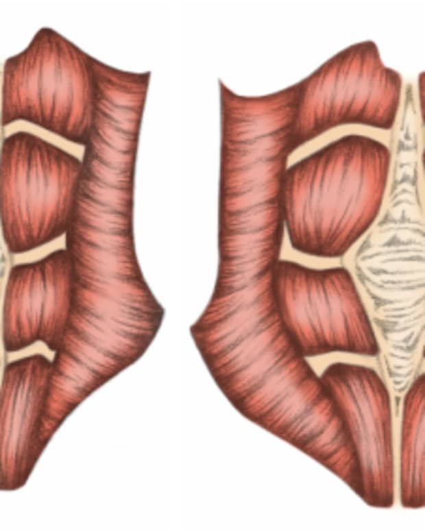 diastasis-recti-the-pooch-and-how-to-get-rid-of-it-with-exercise