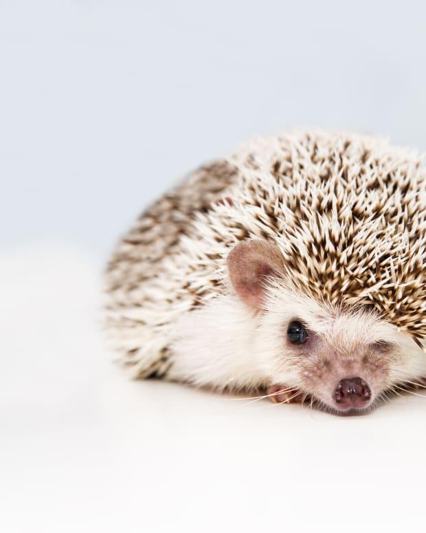 hedgehog-names