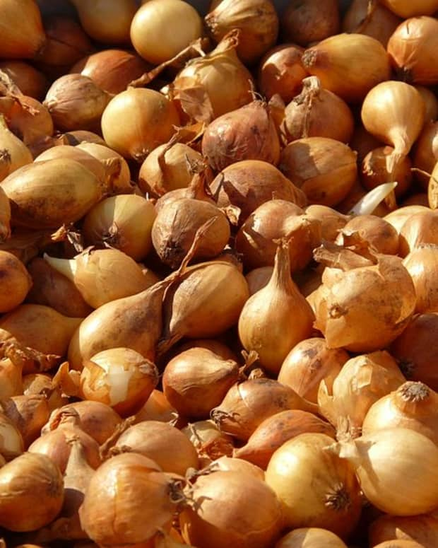 a-guide-to-growing-shallots