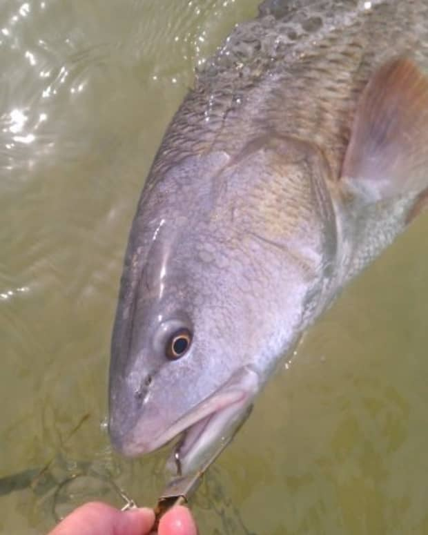 fishing-for-redfish