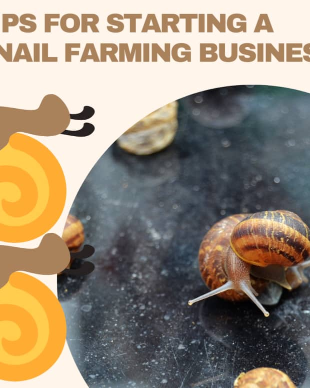 snail-farming-things-to-know-before-starting-your-snail-farm-business