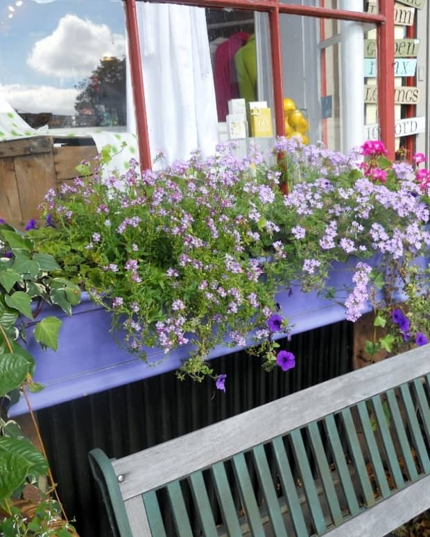 window-box-ideas-for-all-seasons