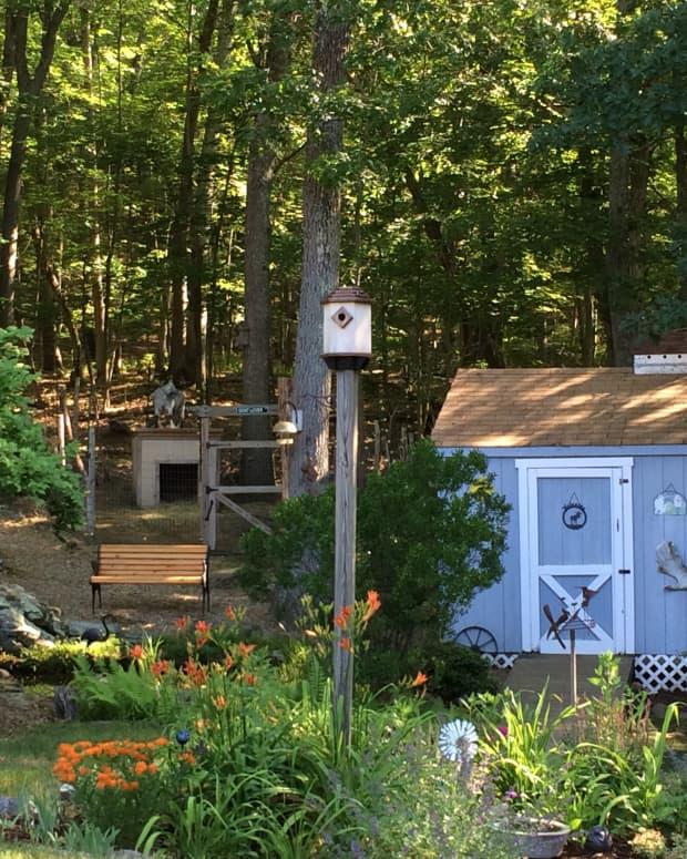 create-a-backyard-wildlife-habitat