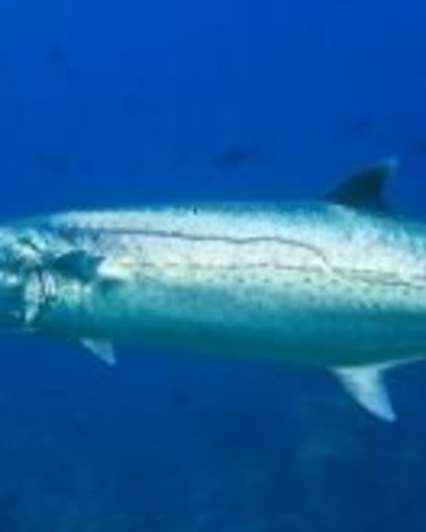 catching-more-king-mackerel