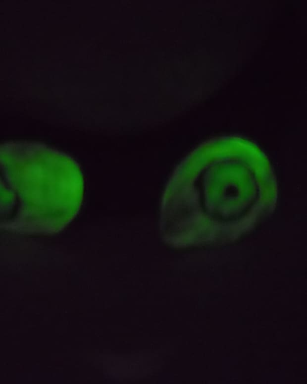 how-to-make-glowing-eyes-for-halloween