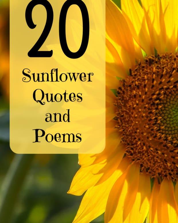 sunflower-quotes