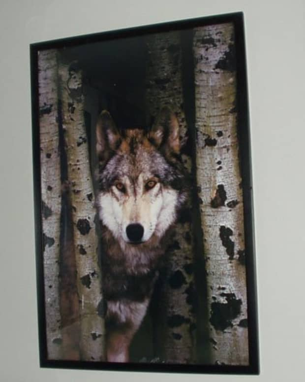 wolf-party-ideas