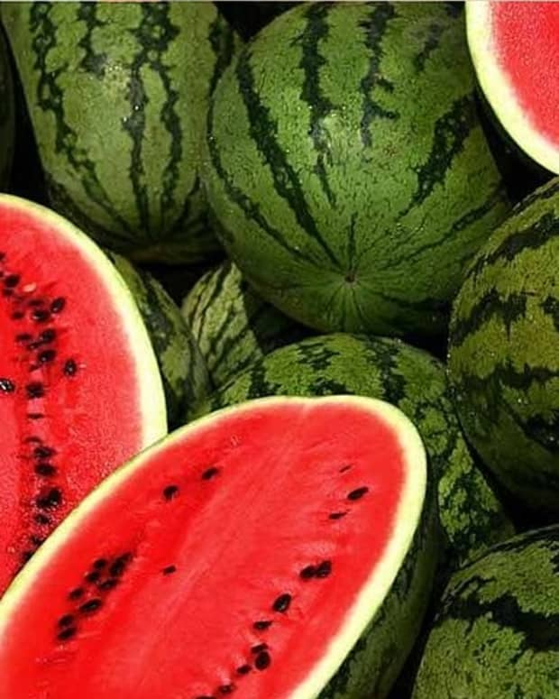 a-guide-to-growing-watermelons