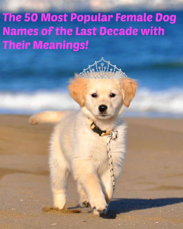 female-dog-names-50-most-popular-female-dog-names