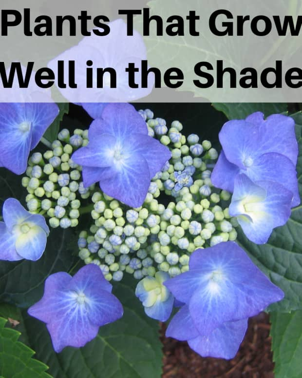 more-plants-that--grow-in--shade