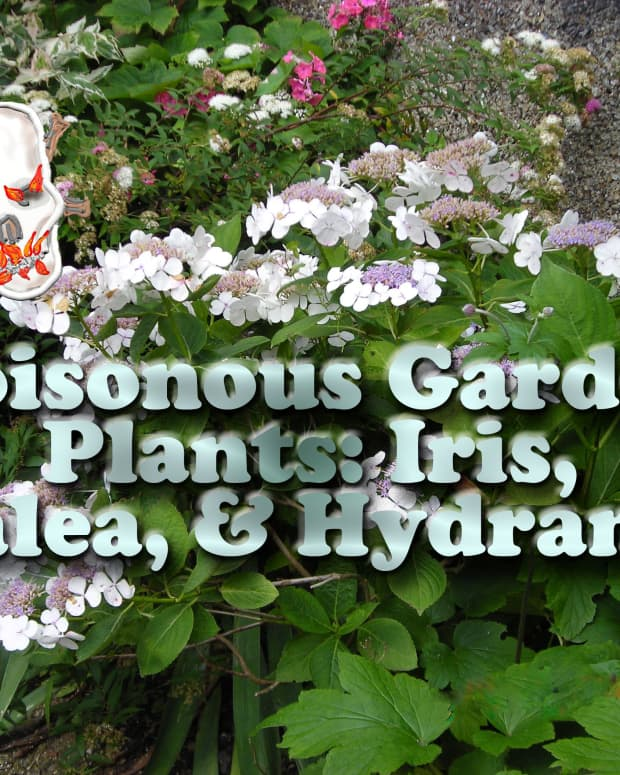 poisonous_plants_iris_azalea_hydrangea