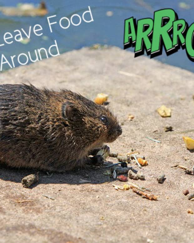 how-to-get-rid-of-rats-under-a-deck-for-ever
