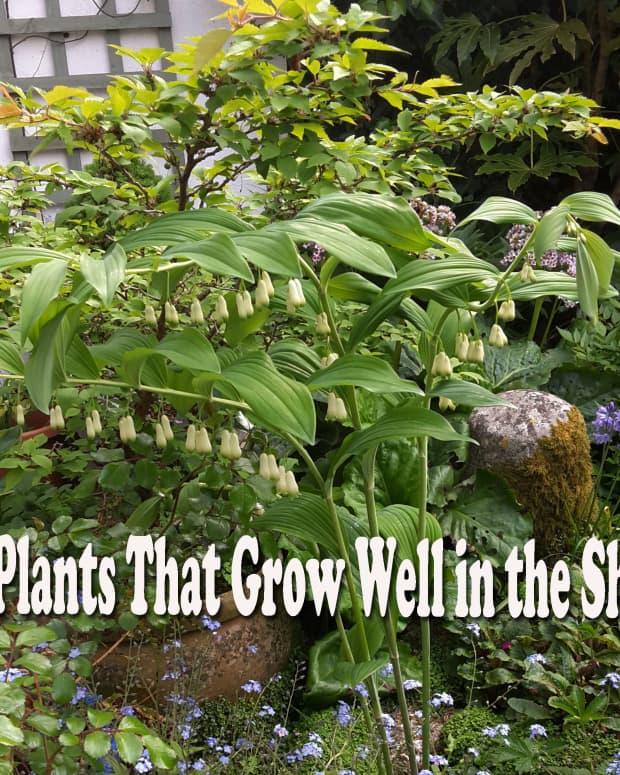 10_shade_tolerant_plants