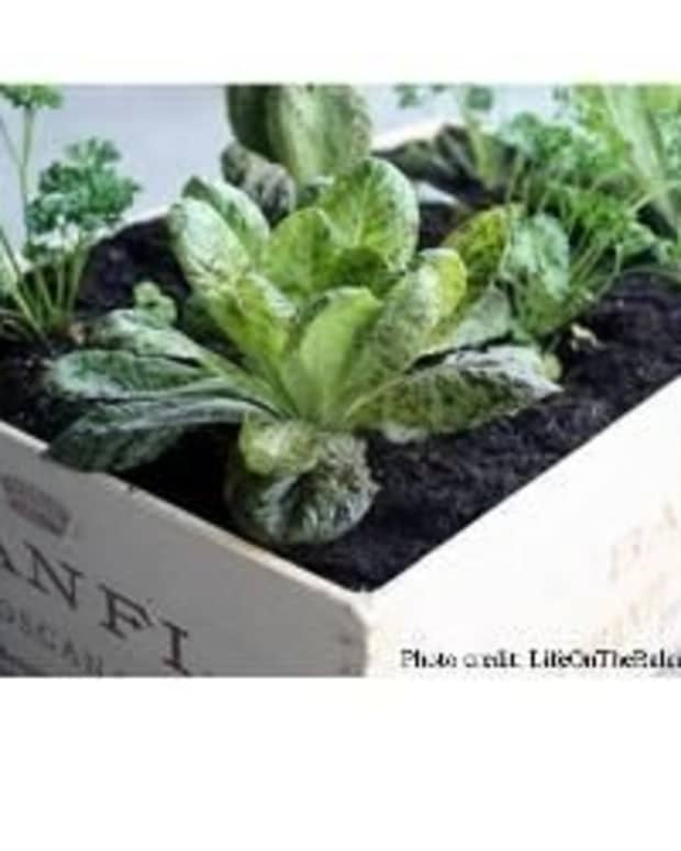 herb-box-container-garden