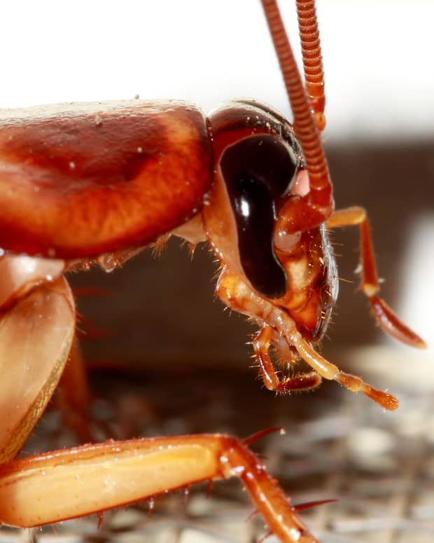 how-to-get-rid-of-cockroaches-2