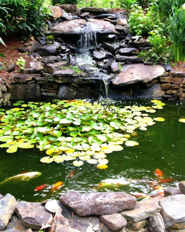 how-to-make-a-gold-fish-pond