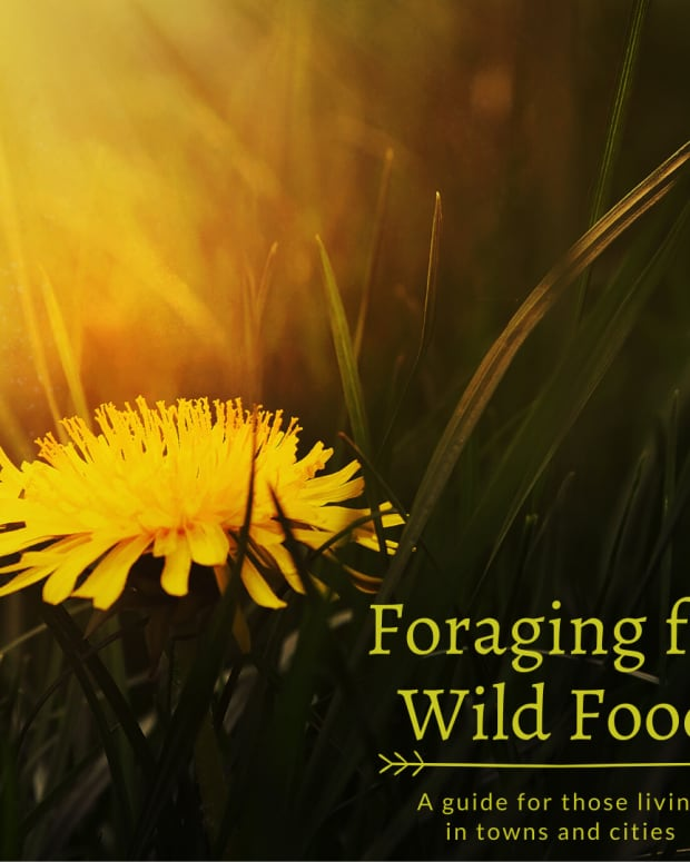 foraging-for-wild-food-in-towns-and-cities