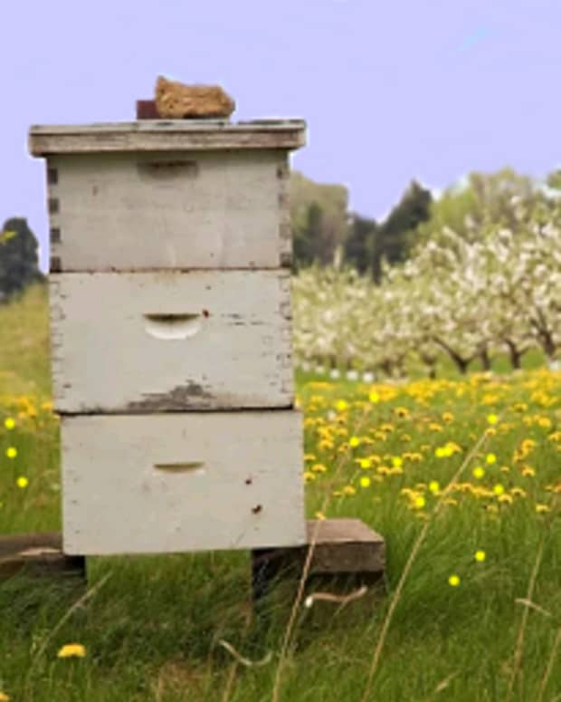 a-guide-to-beehive-maintenance-through-the-seasons