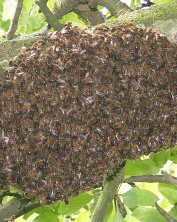 why-do-bees-leave-your-hive