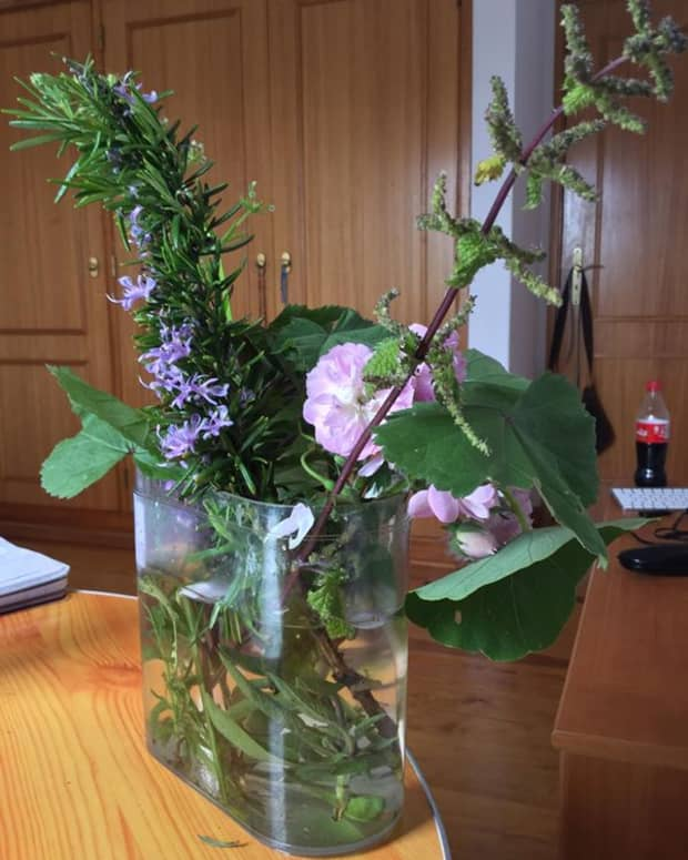 foraging-for-herbs-and-edible-plants-in-your-neighbourhood