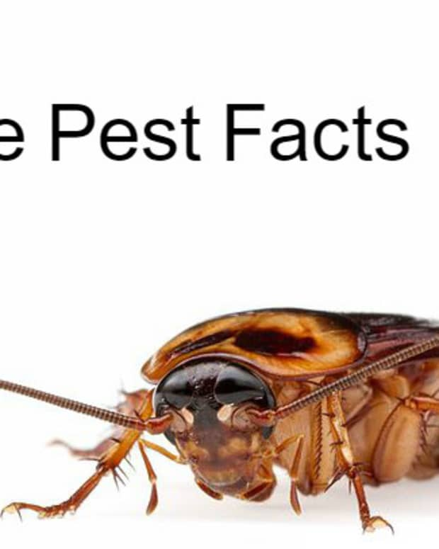 bizarre-pest-facts-for-the-inquisitive