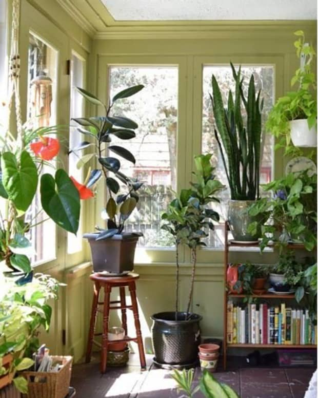how-to-safely-transport-houseplants