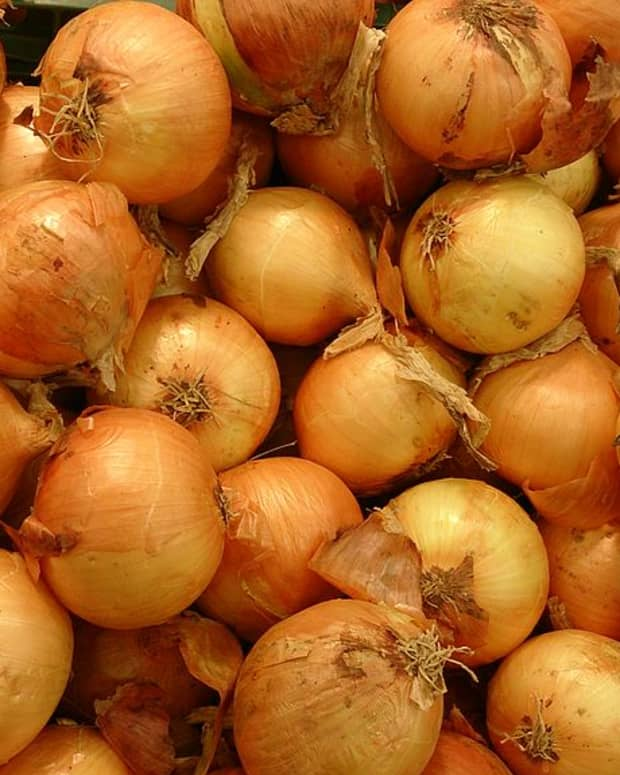 a-guide-to-growing-onions