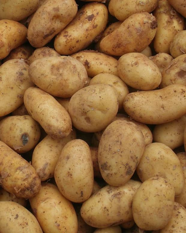 a-guide-to-growing-potatoes