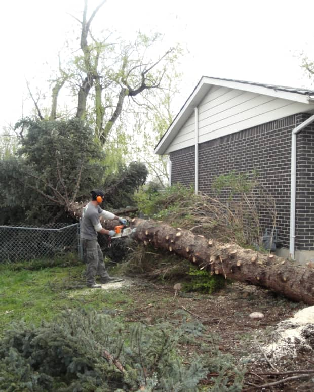 why-it-is-important-to-remove-dangerous-trees-from-your-yard