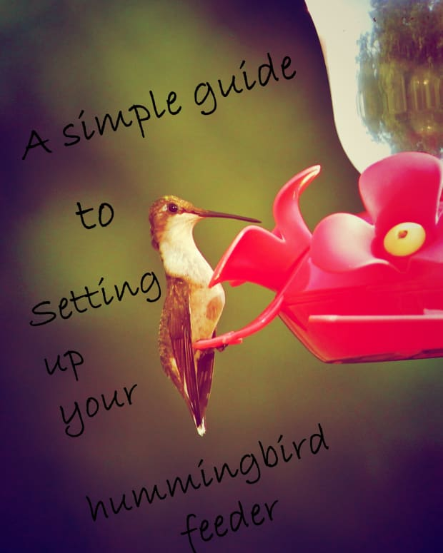 a-simple-guide-to-setting-up-your-hummingbird-feeder