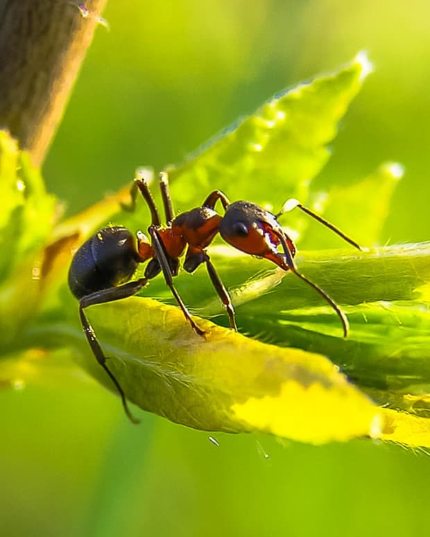 7-natural-ways-to-get-rid-of-ants-how-to-repel-ants-humanely-without-killing-them